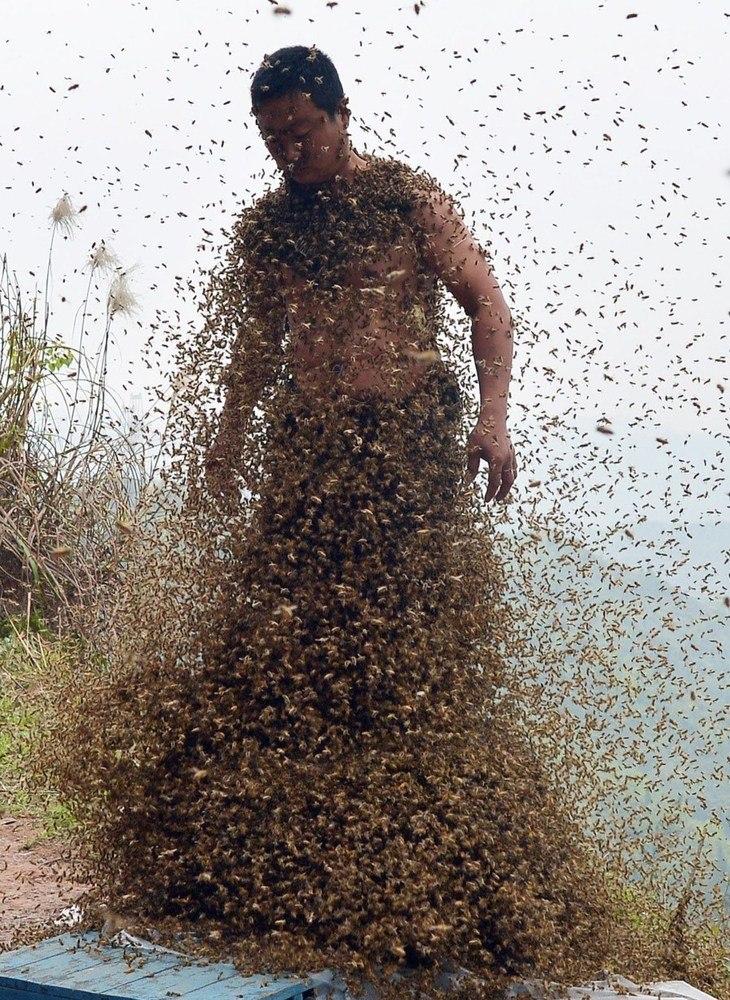 Roj pčela
